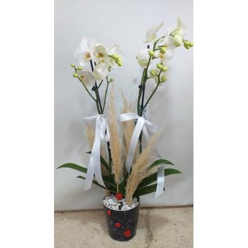 Seramikte 2 Dallı Beyaz Orkide