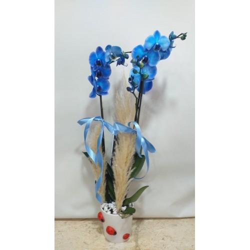 Seramikte İkili Mavi Orkide