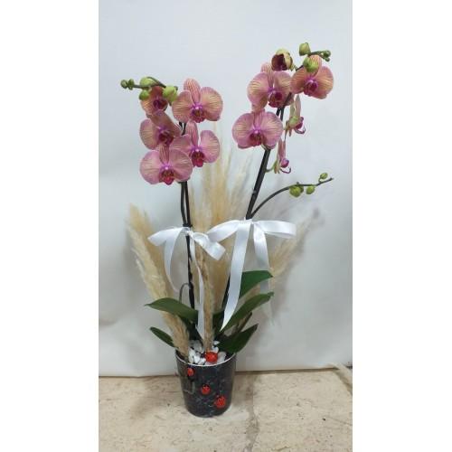 Seramikte İkili Orkide