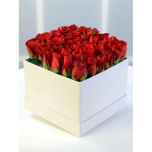 Sevda Şarkısı Kırmızı Güller